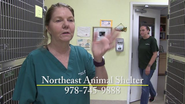 Shelter Tales, July 2018 Edition